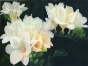 White Fresias